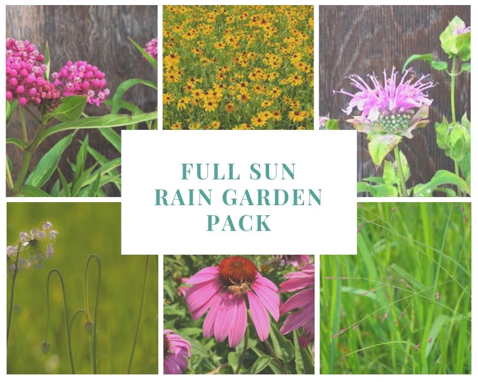 Full Sun Rain Garden Pack
