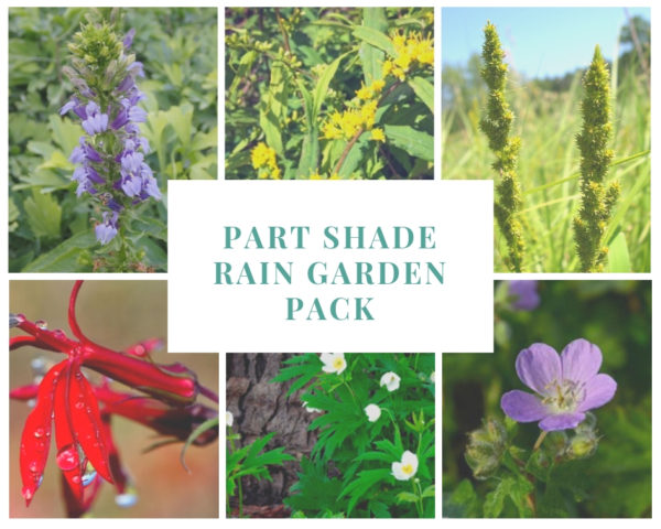 Part Shade Rain Garden Pack