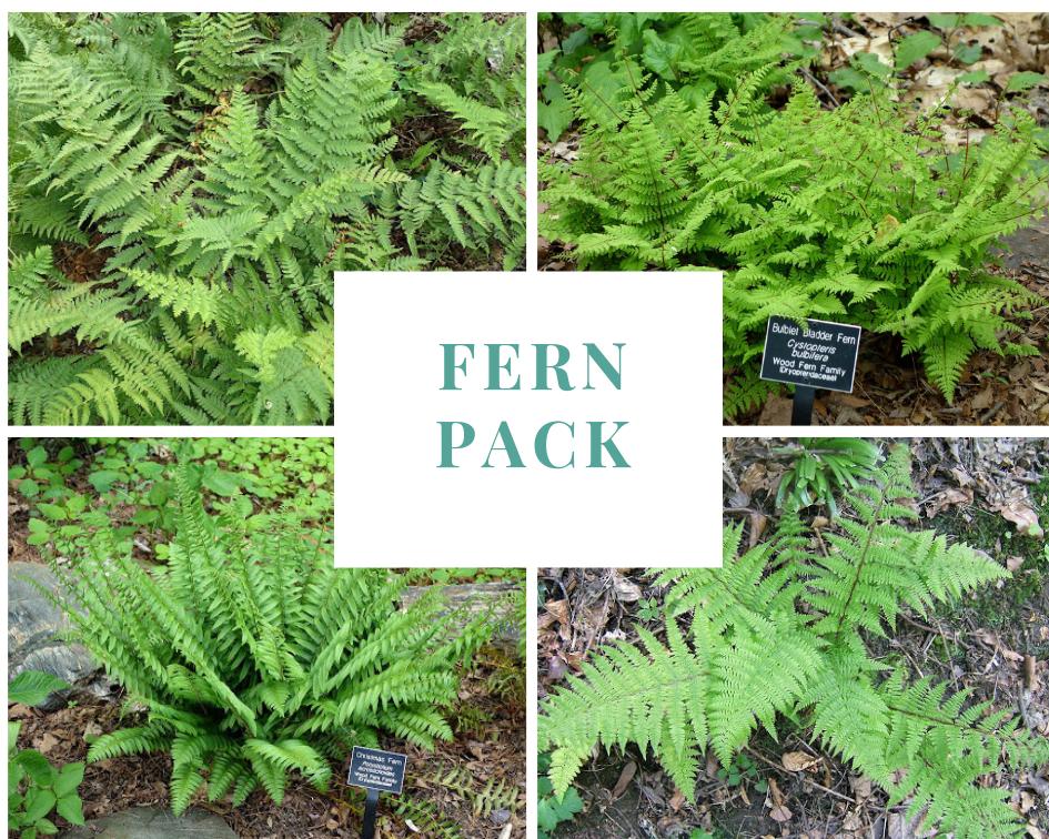 Fern Pack: Assorted Ferns